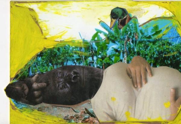 gorila embarazado